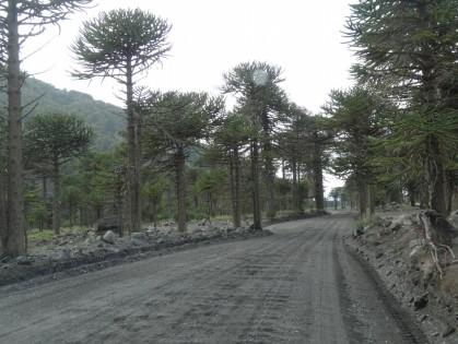 DSC03493 piste argentine