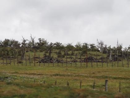 119 2017-02-17 1ers arbres