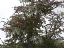 139 2017-02-17 lichens