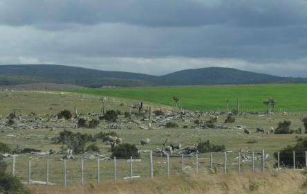 180 2017-02-26 terrain cultivé