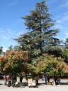 DSC07072 04-30 arbre de noel