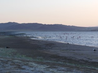 DSCN3507 10-01 plage paracas bambooresort