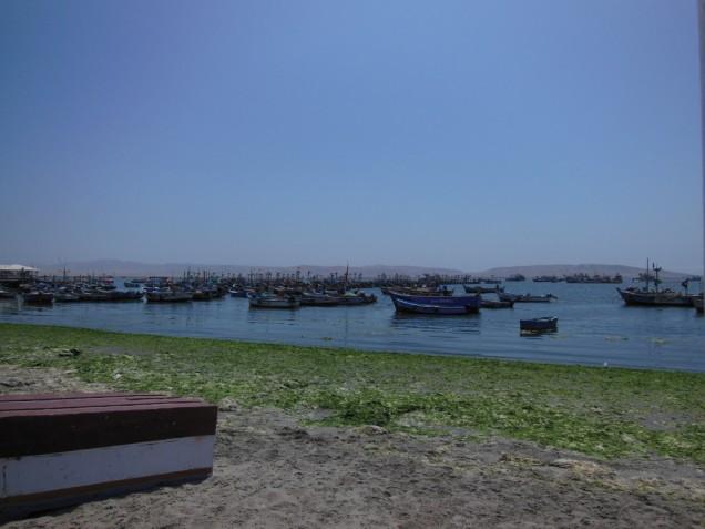 DSCN3572 10-06 port paracas